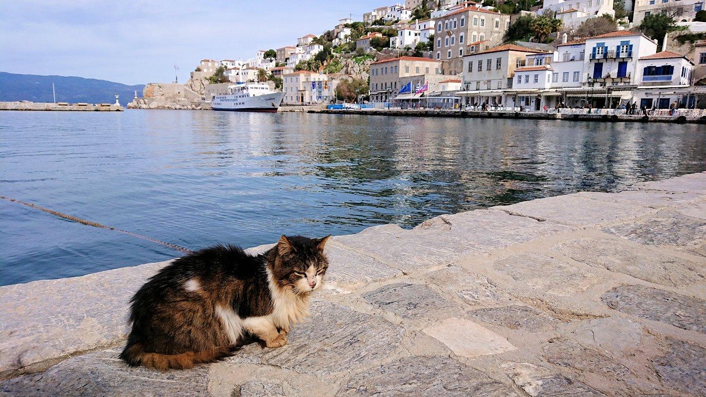 エーゲ海のイドラ島のオシャレな街で港近くでただずむ猫ちゃん2