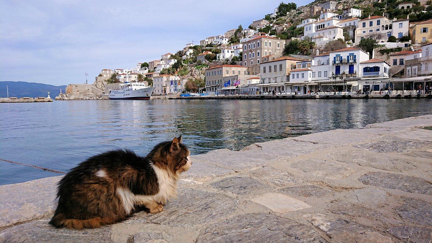 エーゲ海のイドラ島のオシャレな街で港近くでただずむ猫ちゃん3
