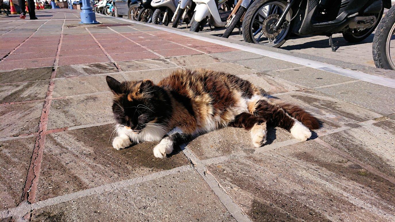 ギリシャのポロス島でも猫ちゃんと戯れる
