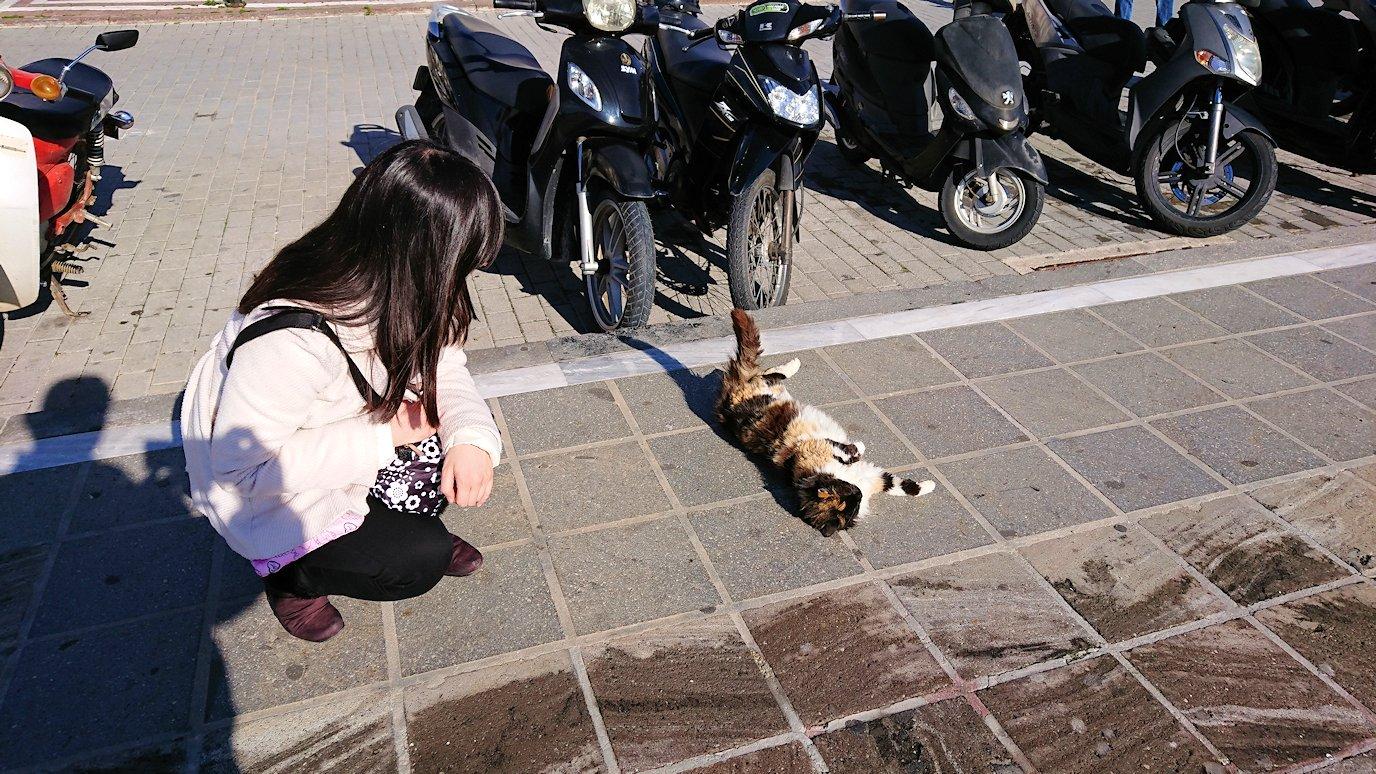 ギリシャのポロス島でも猫ちゃんと戯れる4