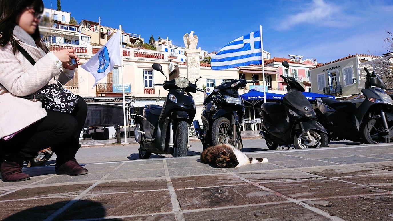 ギリシャのポロス島でも猫ちゃんと戯れる6