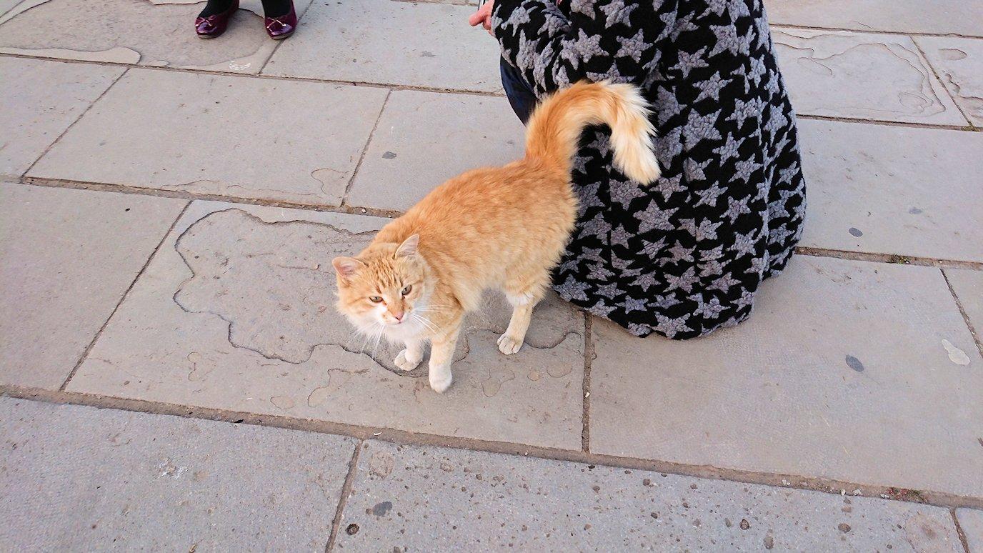ラバトの「ハッサンの搭」近くに居た猫ちゃんと遊ぶ2