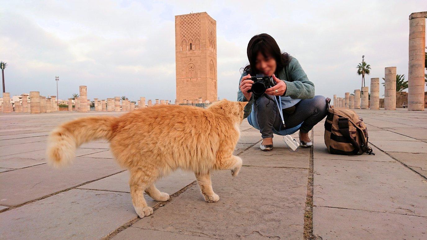 ラバトの「ハッサンの搭」近くに居た猫ちゃんに夢中