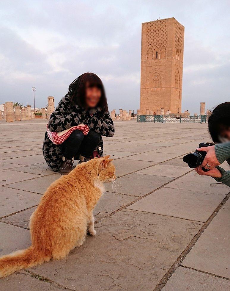 ラバトの「ハッサンの搭」近くに居た猫ちゃんに夢中2