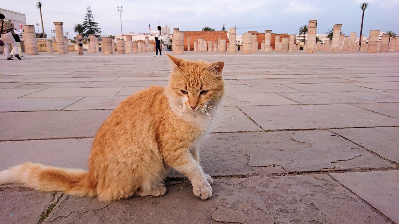 ラバトの「ハッサンの搭」近くに居た猫ちゃんに夢中3