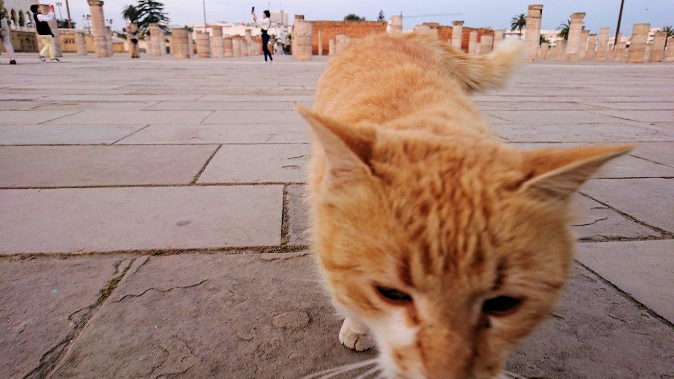 ラバトの「ハッサンの搭」近くに居た猫ちゃんに夢中4