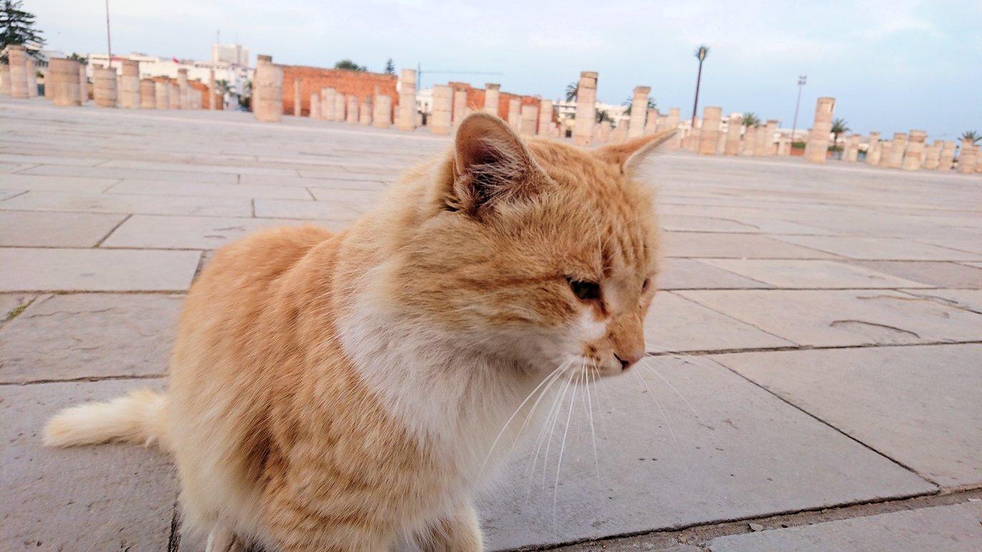 ラバトの「ハッサンの搭」近くに居た猫ちゃんに夢中5