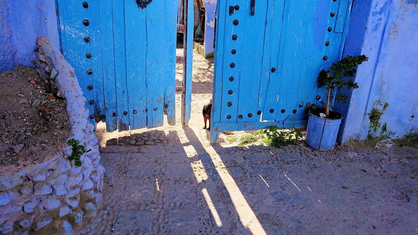青い街シャウエンで見つけた黒猫