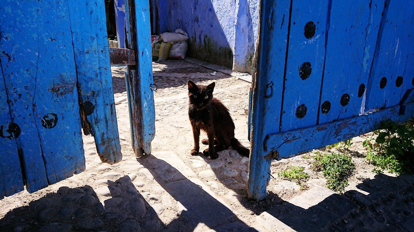 青い街シャウエンで見つけた黒猫2