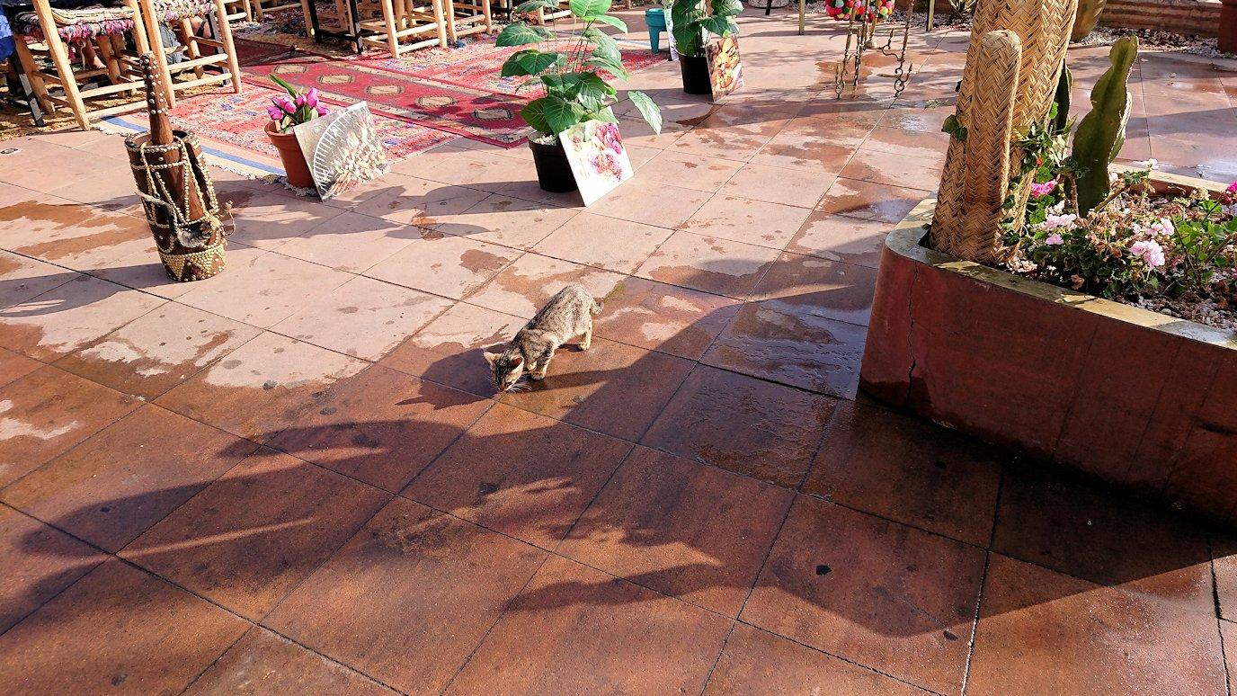 モロッコのマラケシュで旧市街地(メディナ)での雰囲気を4