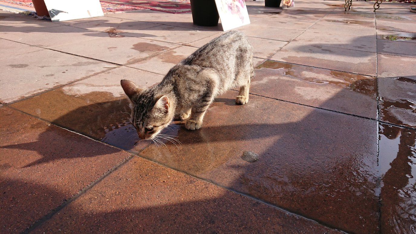 モロッコのマラケシュで旧市街地(メディナ)での雰囲気を5