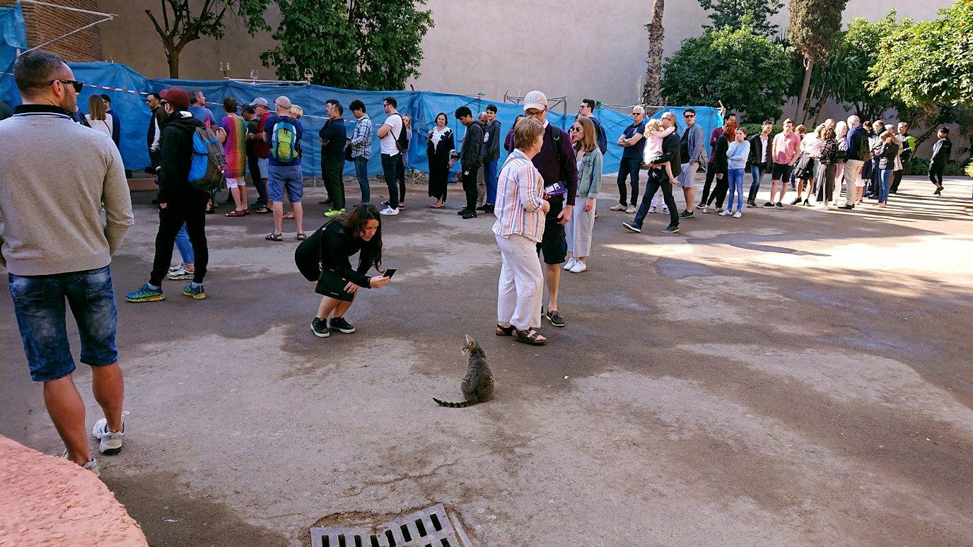 モロッコのマラケシュでバヒア宮殿の周辺で猫と遊ぶ6