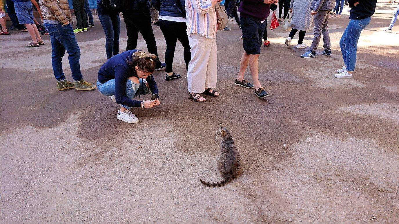 モロッコのマラケシュでバヒア宮殿の周辺で猫と遊ぶ8