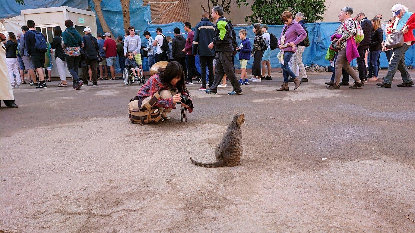 モロッコのマラケシュでバヒア宮殿の周辺で猫と遊ぶ9