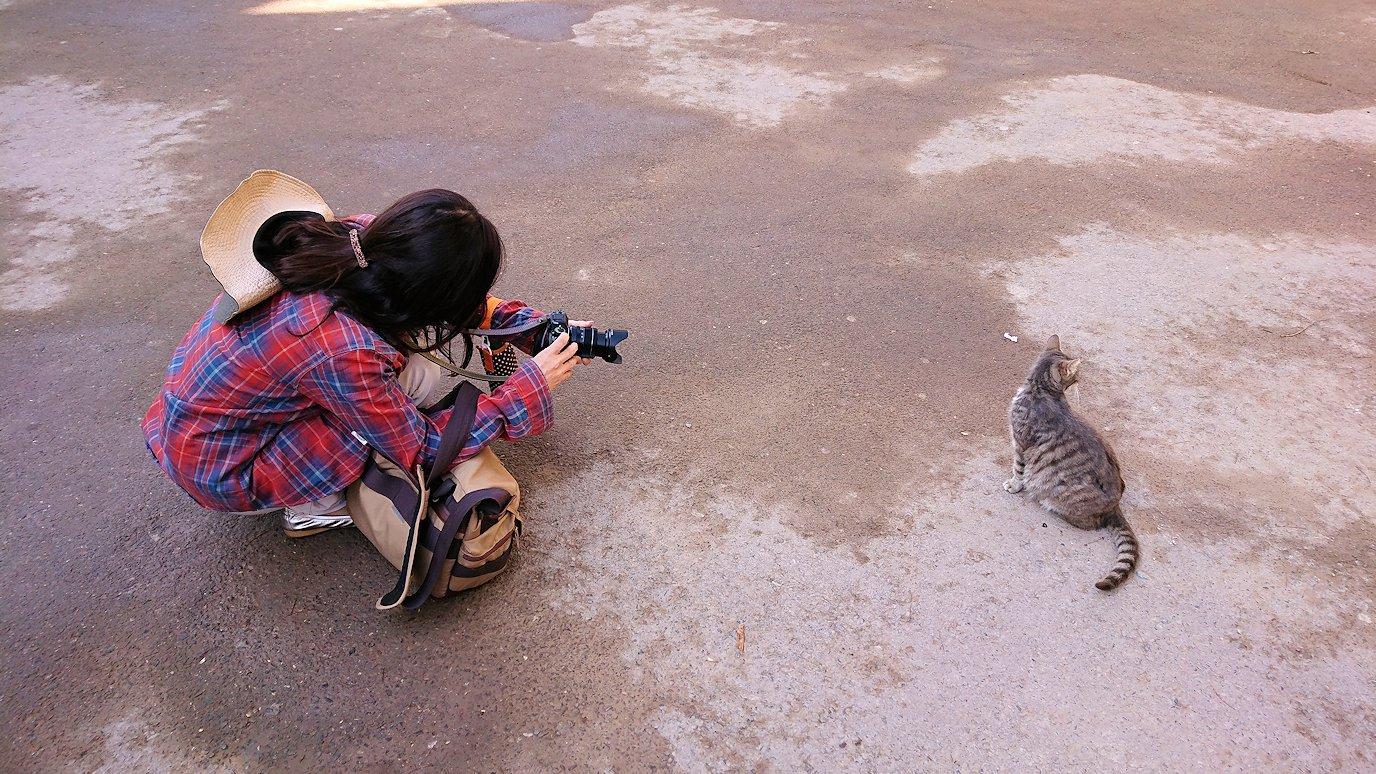 モロッコのマラケシュでバヒア宮殿の周辺で猫の撮影に夢中2