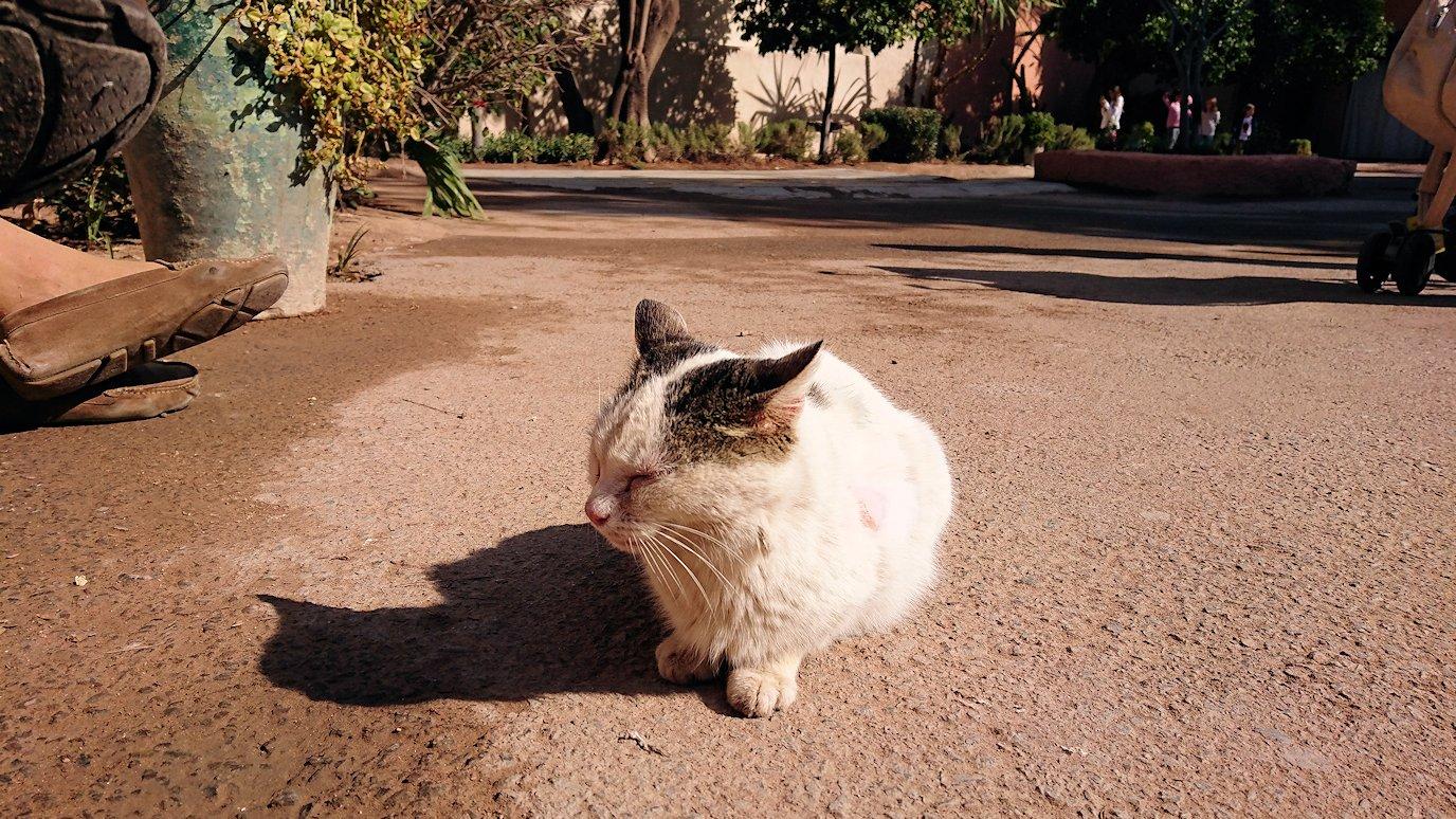 モロッコのマラケシュでバヒア宮殿の周辺で猫の撮影に夢中3