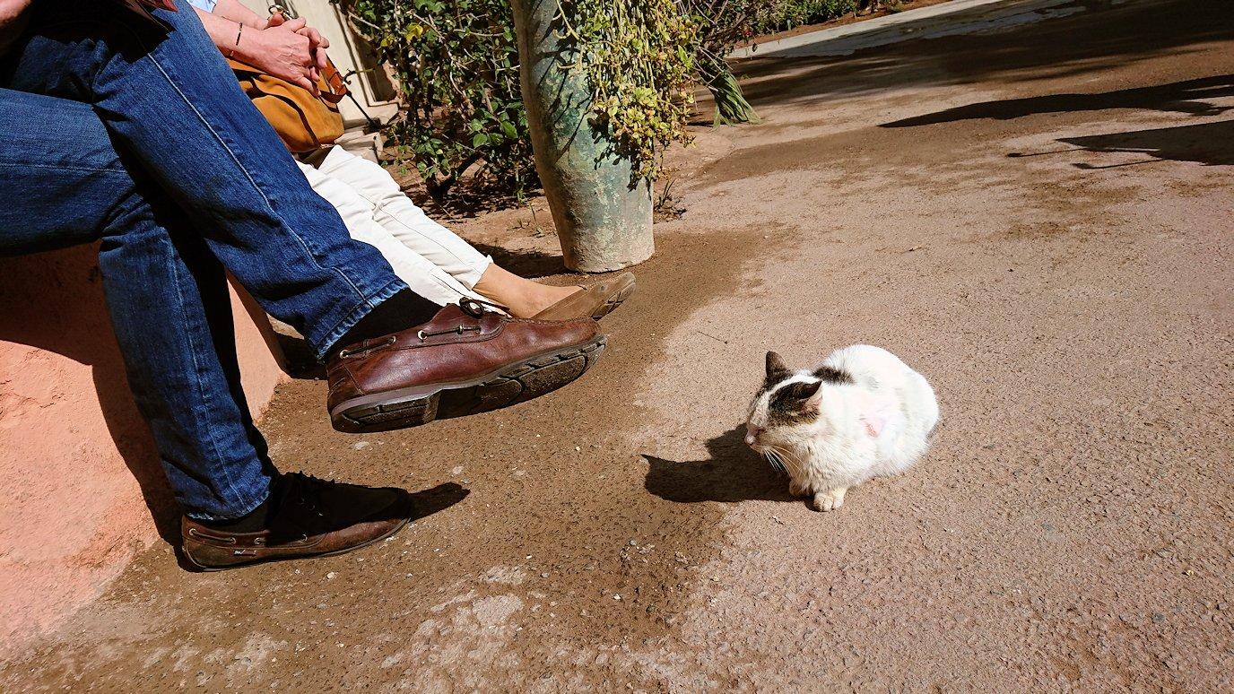 モロッコのマラケシュでバヒア宮殿の周辺で猫の撮影に夢中4