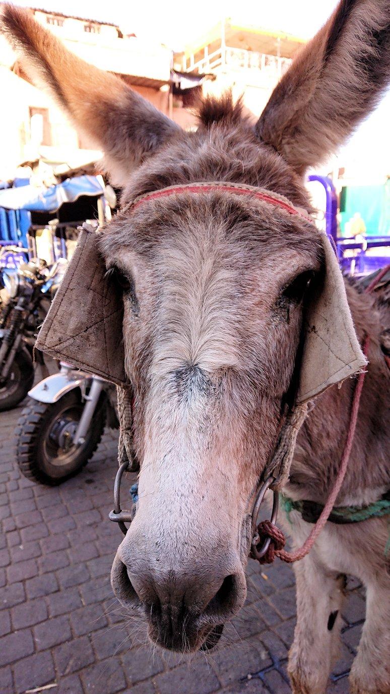 モロッコ・マラケシュでジャマ・エル・フナ広場に近づく5