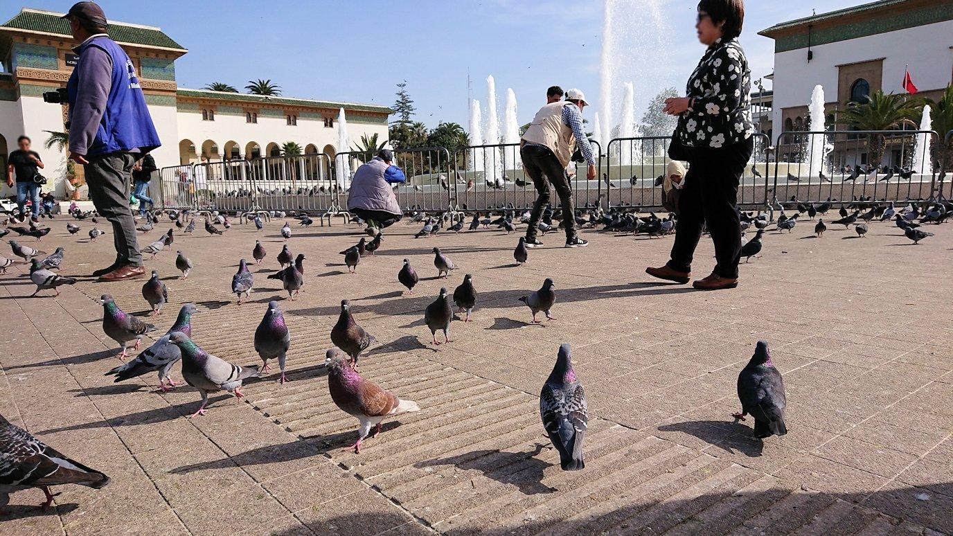 カサブランカのムハンマド5世広場で沢山の鳩と遭遇