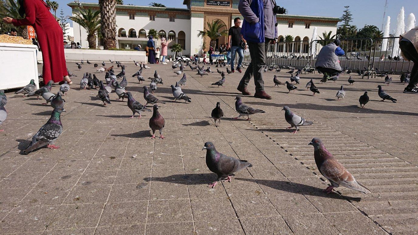 カサブランカのムハンマド5世広場で沢山の鳩と遭遇2