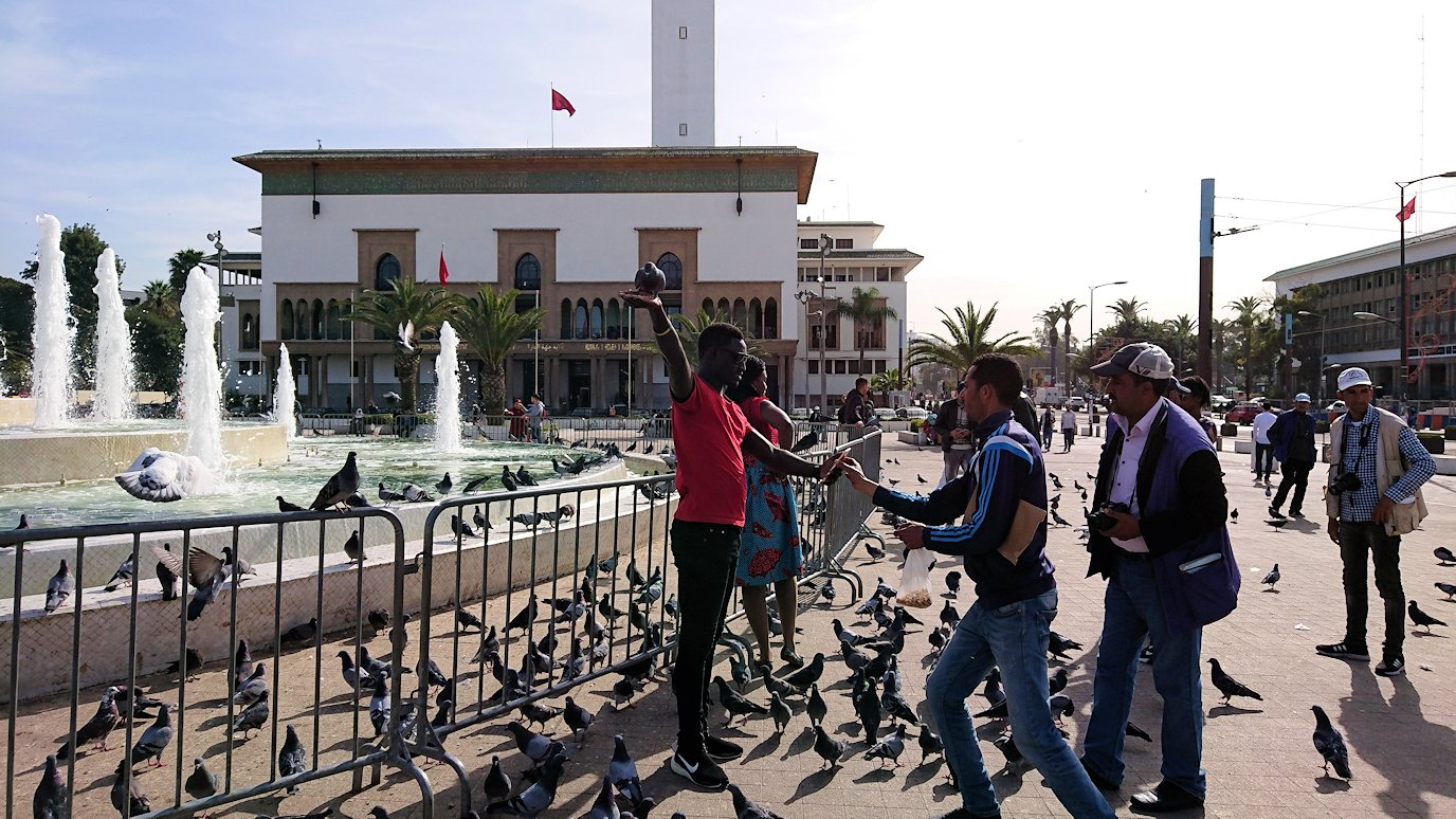 カサブランカのムハンマド5世広場で沢山の鳩と遭遇5