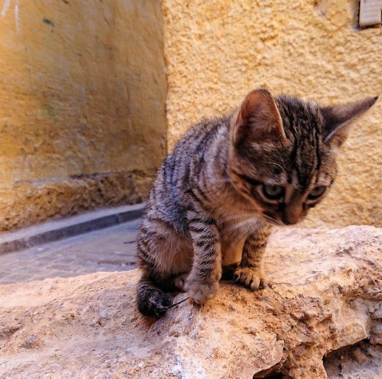 フェズのメディナの猫ちゃんと遊ぶ