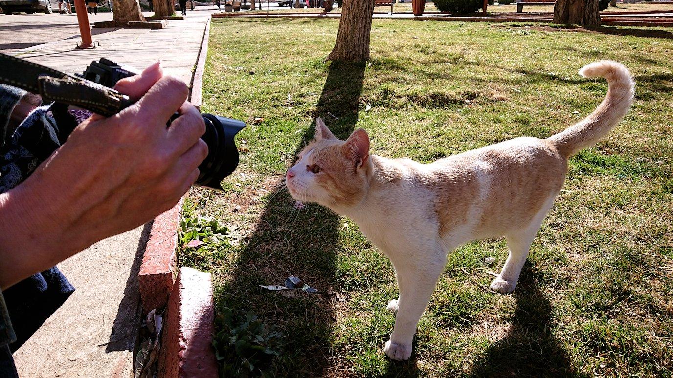 モロッコのイフレンの街で見つけた猫ちゃん1