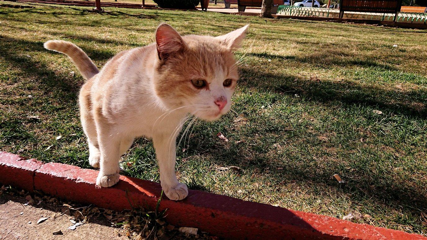 モロッコのイフレンの街で見つけた猫ちゃん2