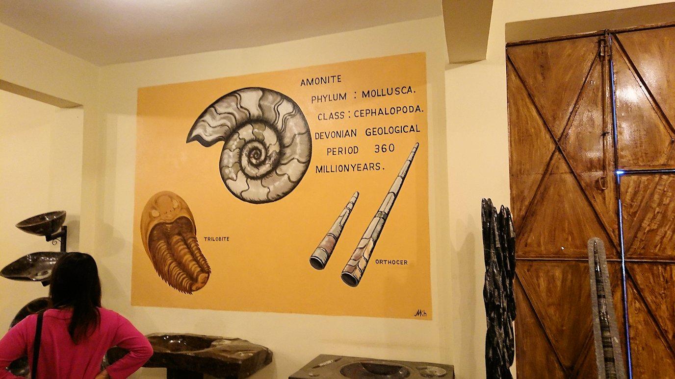 モロッコのエルフードで化石のお土産物屋さんの化石4