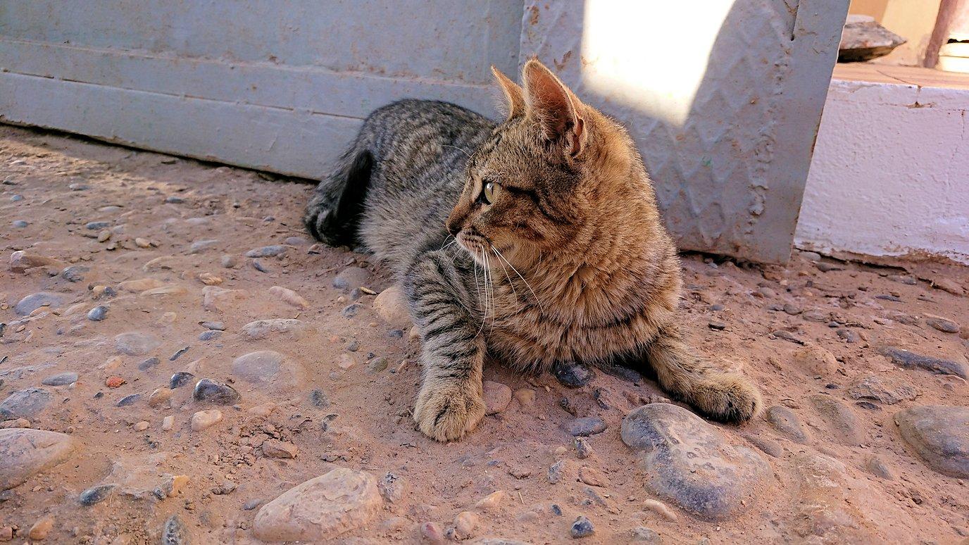 モロッコのエルフードで化石のお土産物屋さんの猫ちゃん