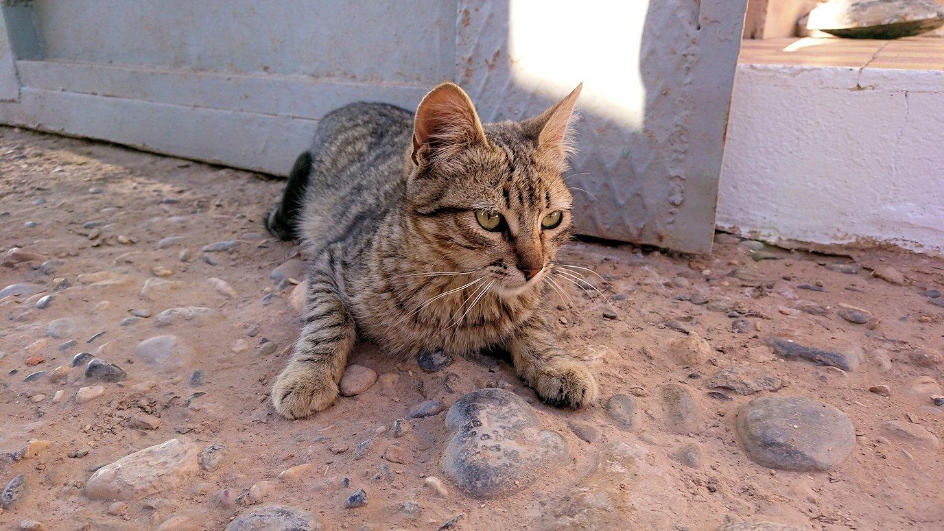 モロッコのエルフードで化石のお土産物屋さんの猫ちゃん1