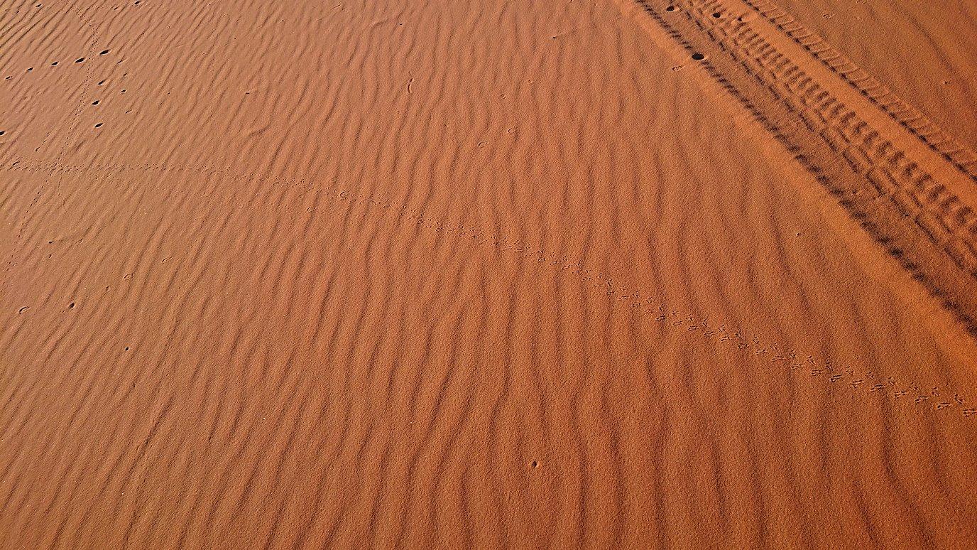 モロッコでサハラ砂漠の朝日鑑賞を終えて戻ります1