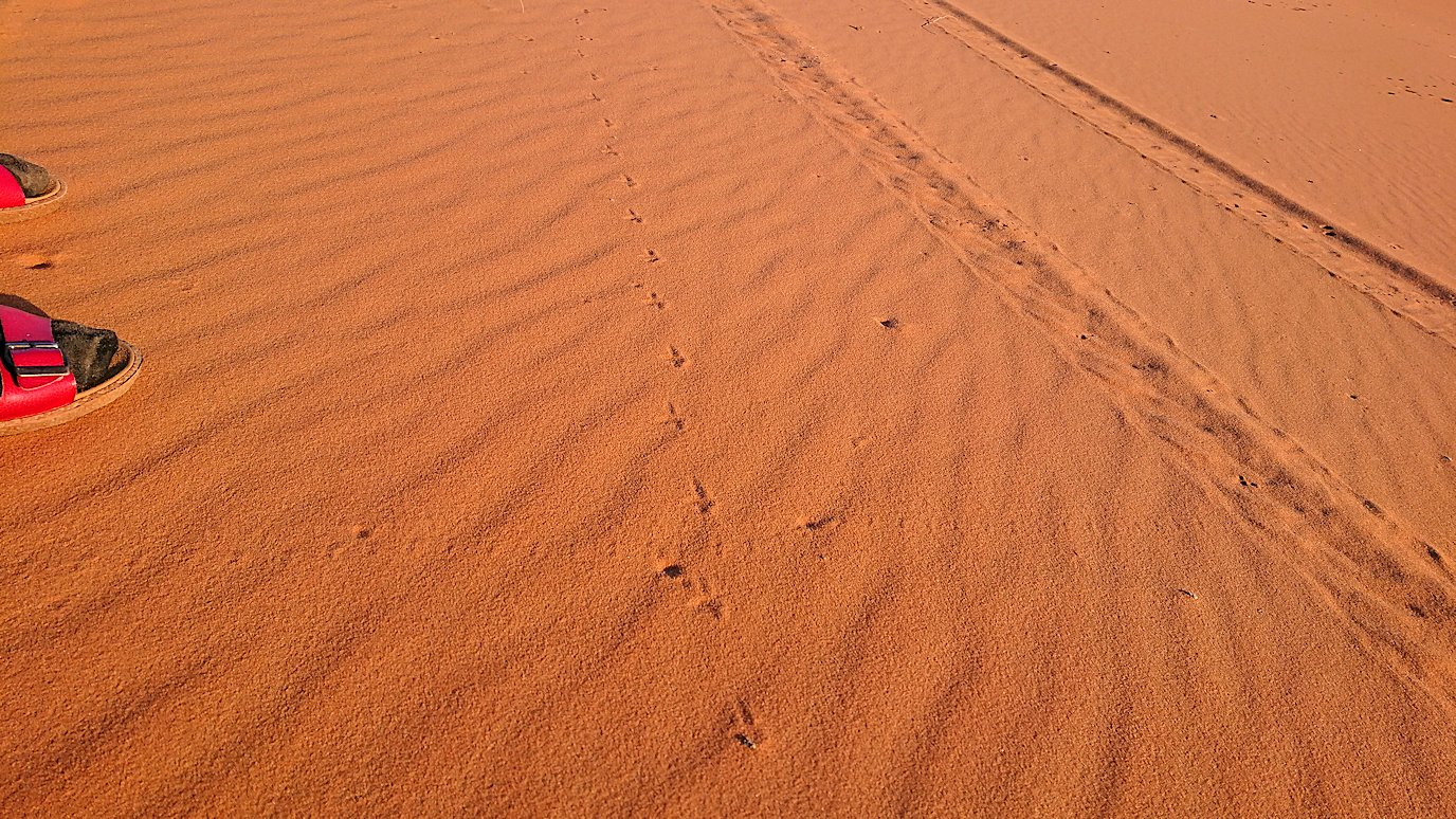 モロッコでサハラ砂漠の朝日鑑賞を終えて戻ります2