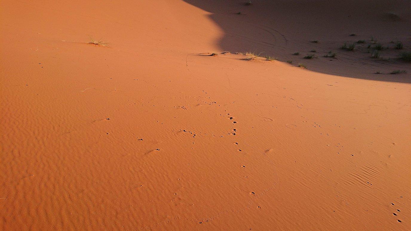 モロッコでサハラ砂漠の朝日鑑賞を終えて戻ります4