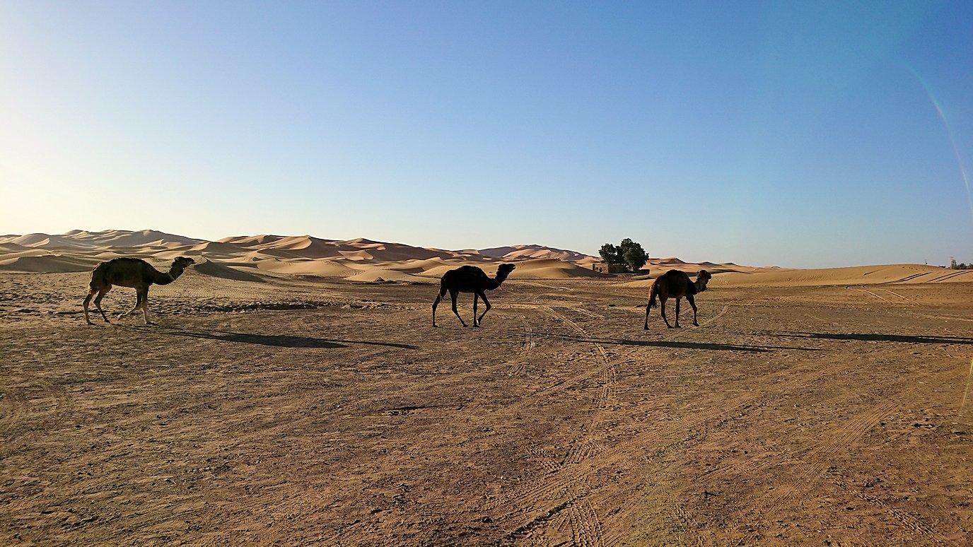 サハラ砂漠でベルベル風朝食をいただきます2