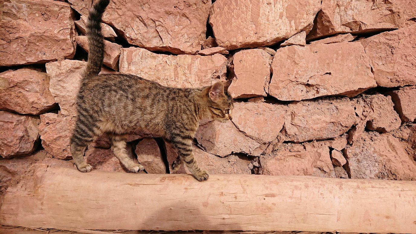 モロッコのワルザザートのアイト・ベン・ハッドゥの猫ちゃん