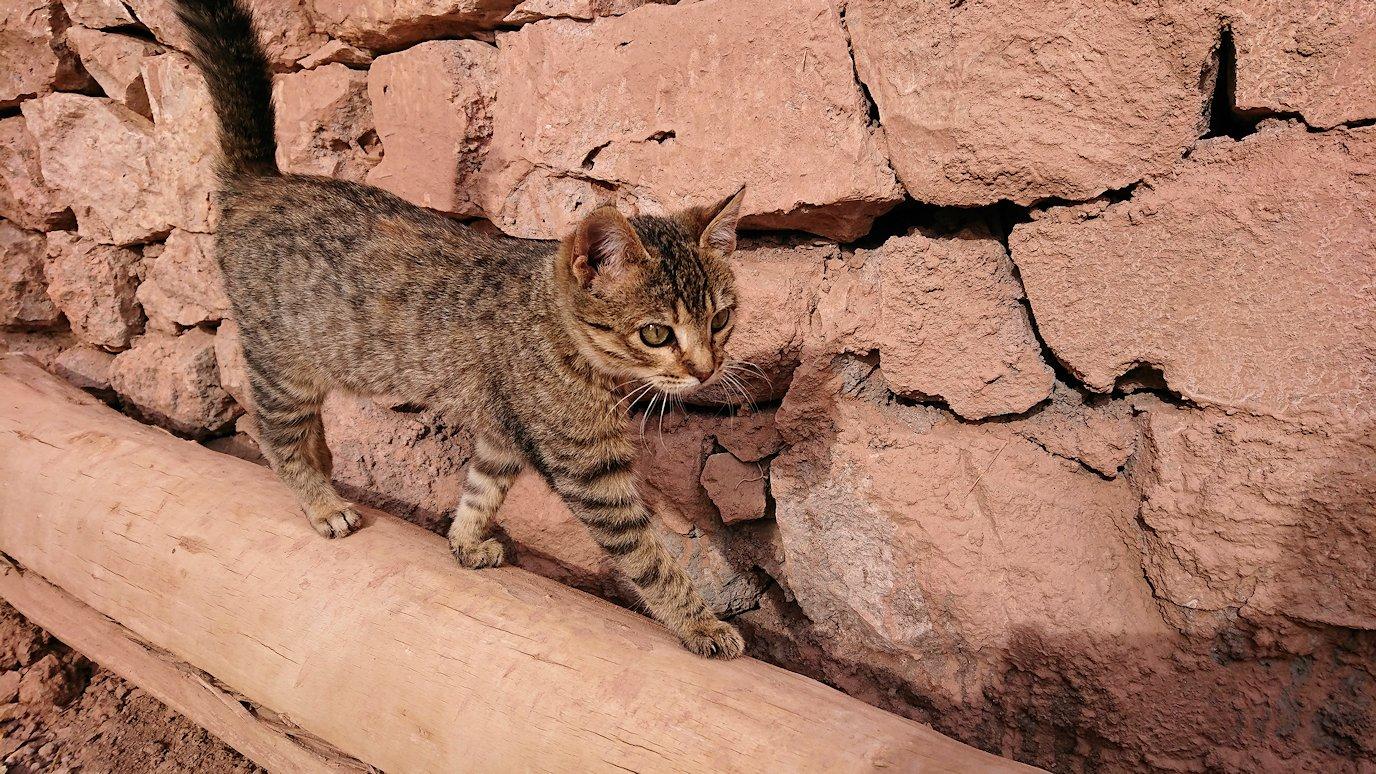 モロッコのワルザザートのアイト・ベン・ハッドゥの猫ちゃん1
