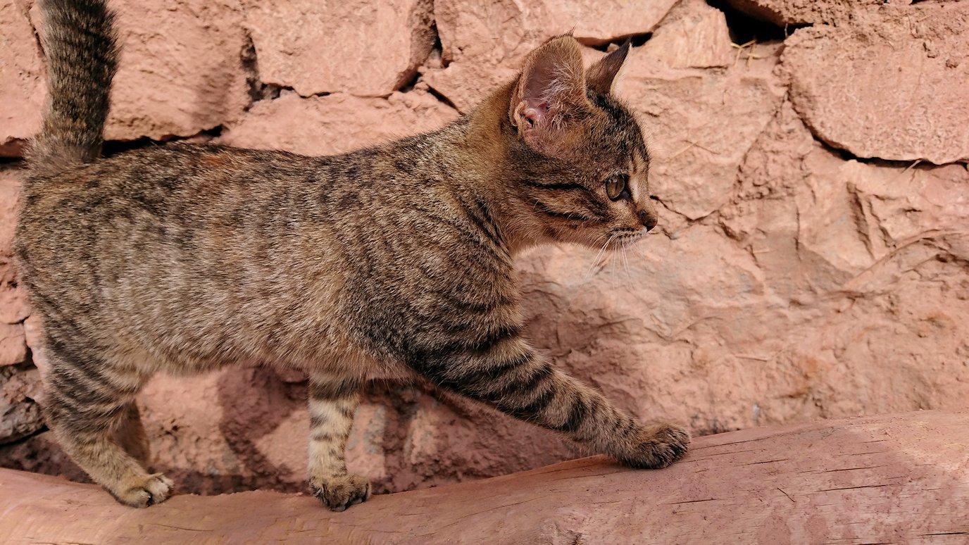 モロッコのワルザザートのアイト・ベン・ハッドゥの猫ちゃん2