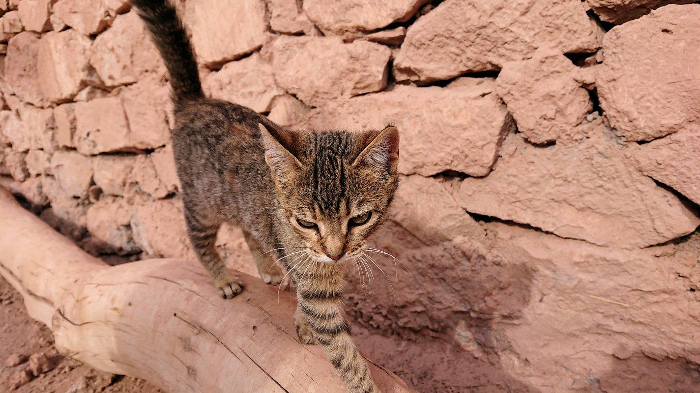 モロッコのワルザザートのアイト・ベン・ハッドゥの猫ちゃん3