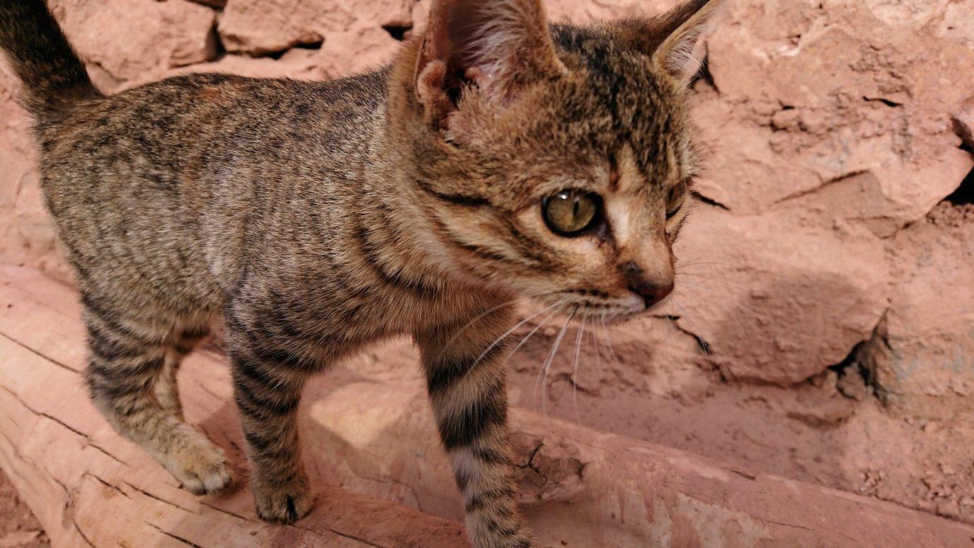 モロッコのワルザザートのアイト・ベン・ハッドゥの猫ちゃん4