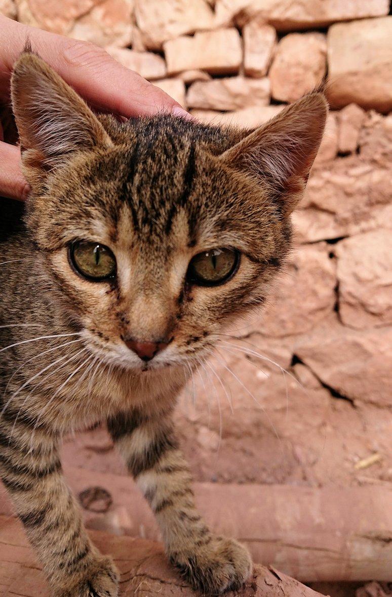 モロッコのワルザザートのアイト・ベン・ハッドゥの猫ちゃん5