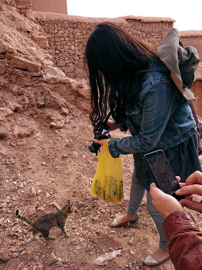 モロッコのワルザザートのアイト・ベン・ハッドゥの猫ちゃん6