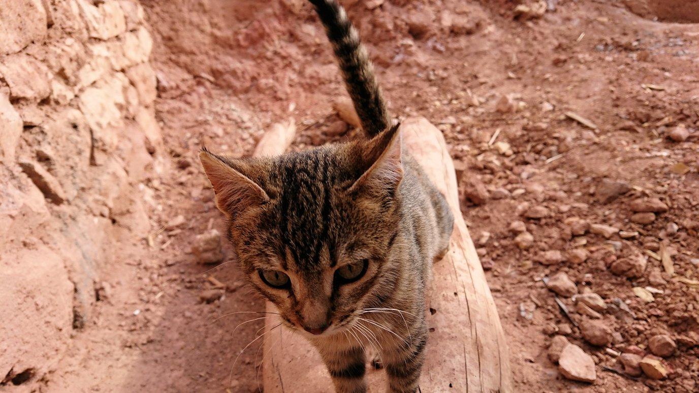 モロッコのワルザザートのアイト・ベン・ハッドゥの猫ちゃんの様子2