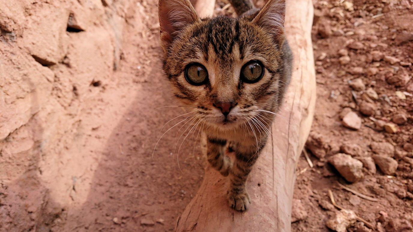 モロッコのワルザザートのアイト・ベン・ハッドゥの猫ちゃんの様子3