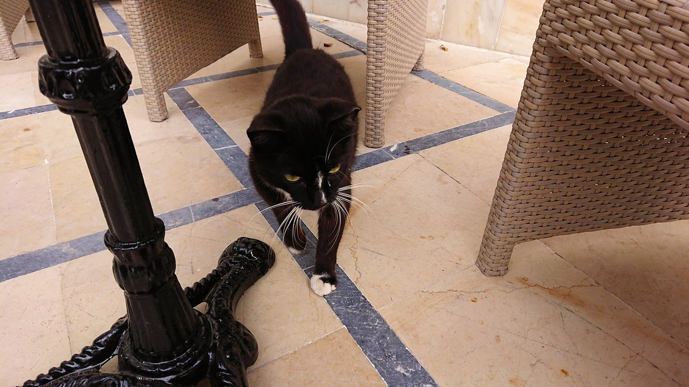 チュニジアのスースの街にある「マルハバ ロイヤル サレム」ホテルに到着1