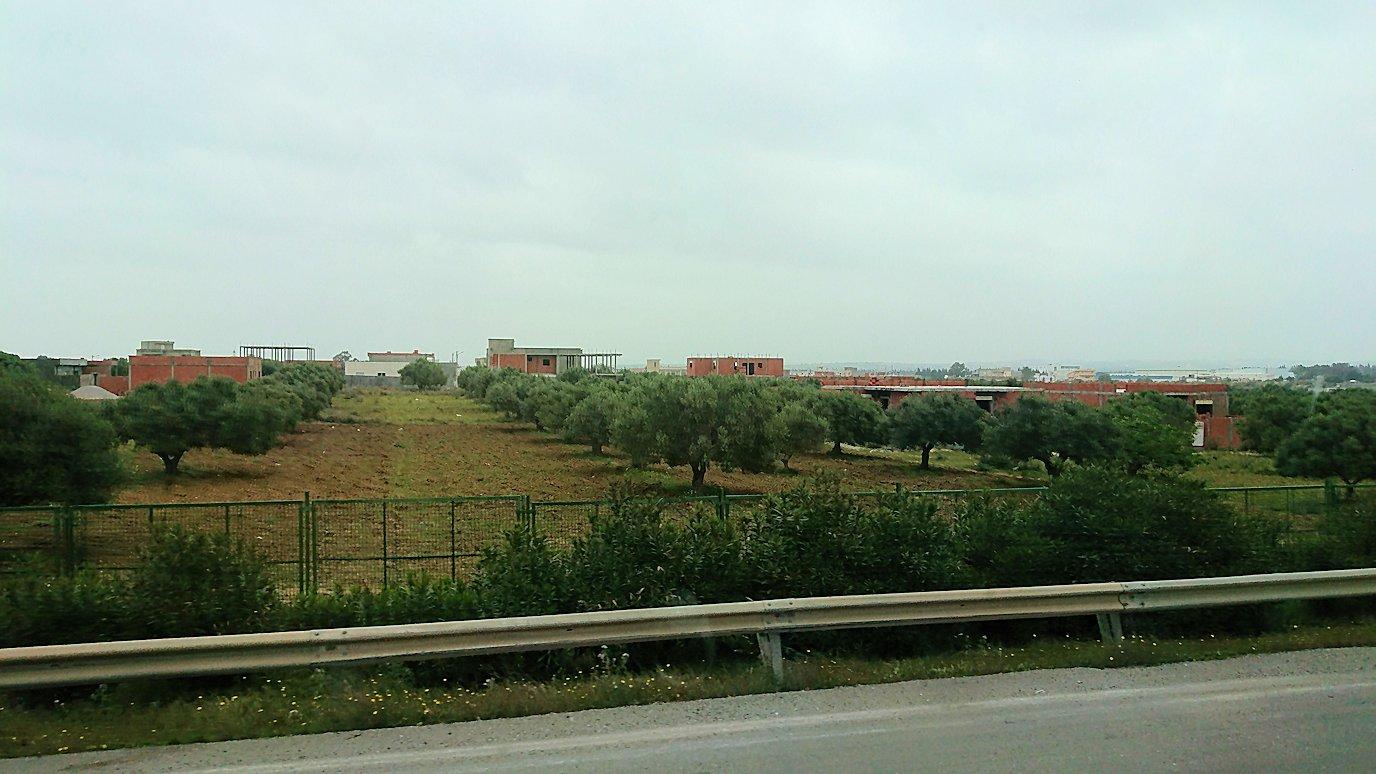 チュニジアのスースの街にある「マルハバ ロイヤル サレム」ホテルからドゥッガ遺跡に向けて移動する途中の景色3