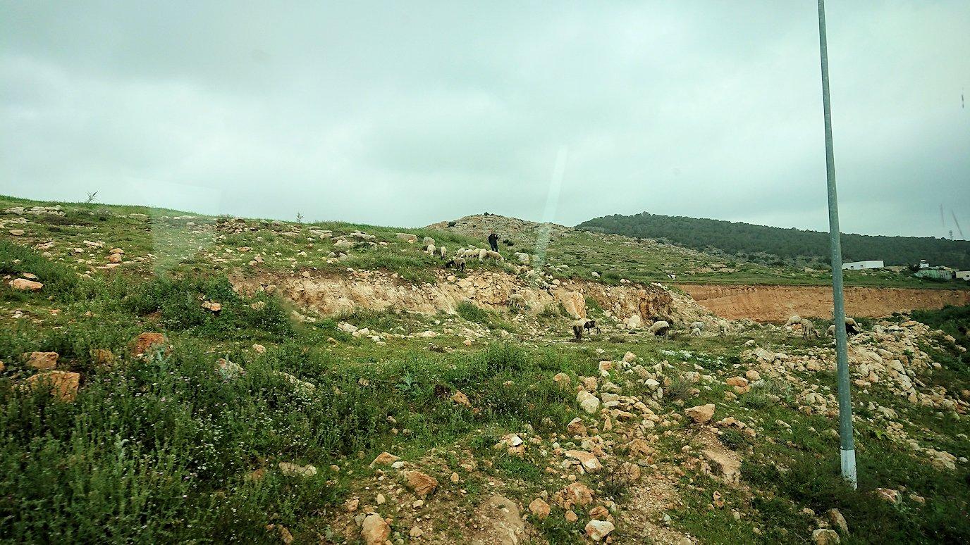チュニジアのスースの街にある「マルハバ ロイヤル サレム」ホテルからドゥッガ遺跡に向けて近づいてきた様子5