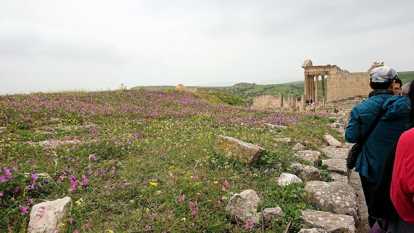 チュニジアのドゥッガ遺跡で奥に進みます4
