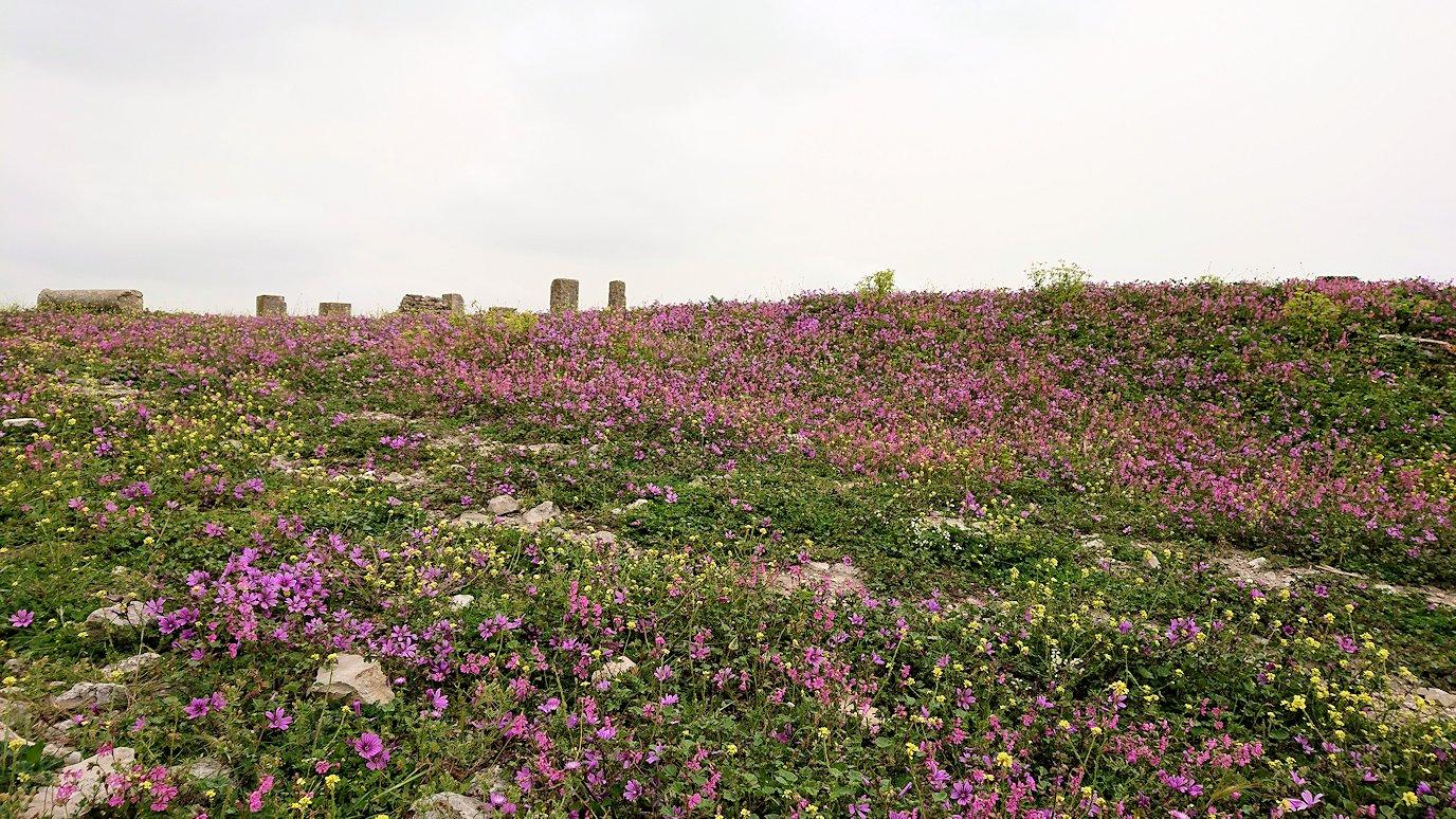 チュニジアのドゥッガ遺跡で奥に進みます7