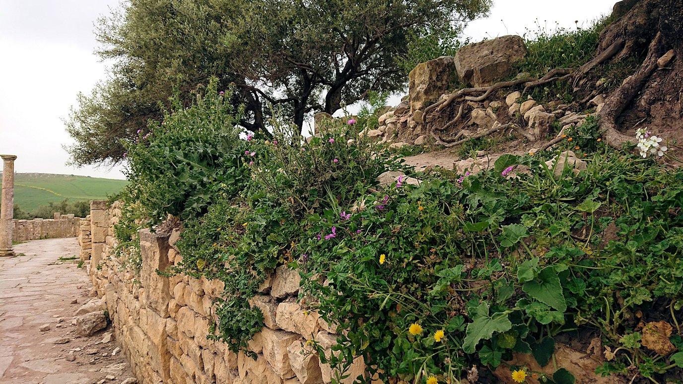 チュニジアのドゥッガ遺跡内を散策6